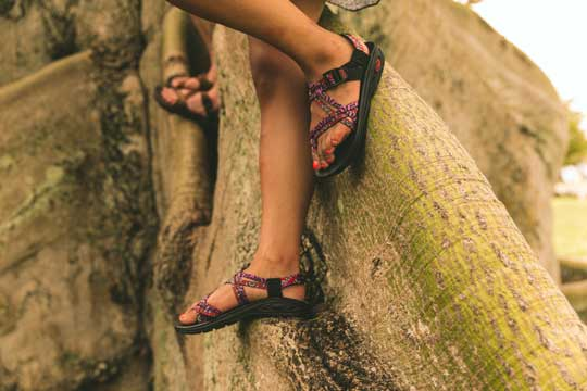 Climbing Tree in Chacos