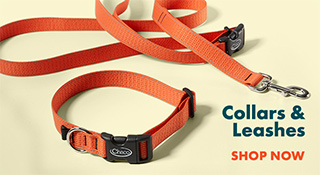 Dog leashes and other gear.