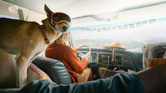 Dog wearing ski goggles in a van