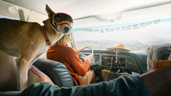Dog wearing ski goggles in a van