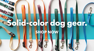 Solid-color dog gear. Shop now.