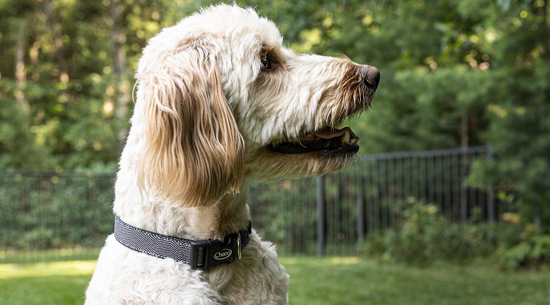 A precious dog being super cute.